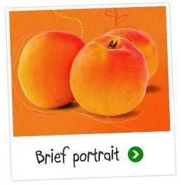 Brief portrait