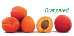 Abricots en vrac de la variété Orangered. Un des abricots est coupé en 2, laissant apparaitre son noyau