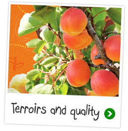 Terroirs and quality